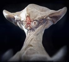 CDW Warmup Albino 1 by BenMauro