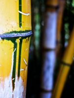 Bamboo by theDexperience