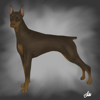 Doberman - Realistic painting by The-Poker