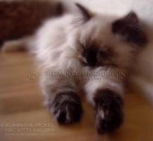 Tortie Point Himalayan Cat 2 by Kumiko-Art