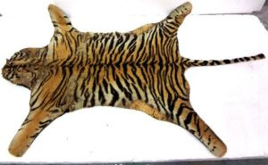 Antique tiger pelt (circa 1960 or prior) by CatBonesTaxidermy