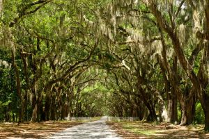 The Oaks of Wormsloe by kennedmh