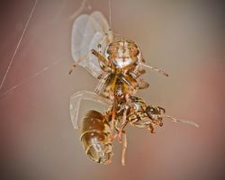 Said the Spider to the Fly... by cathy001