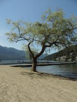 The Photogetic tree! by x-Mathias