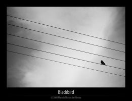 Blackbird by KDEWolf