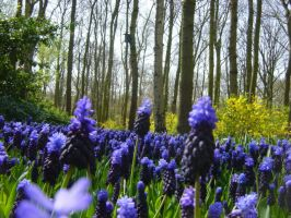 Bluebell path by SuperDecimal