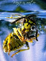 wasp in water by Just4guitar