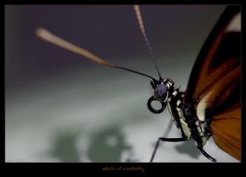 details of a butterfly by oetzy