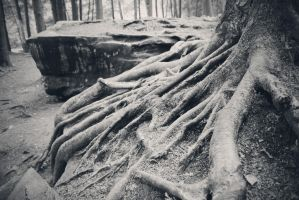 Roots II by withlovexoxo