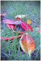 Trailing Colours of the Season by TeaPhotography