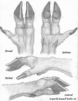 Cervidae Hand Concept by RussellTuller
