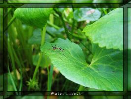 Water Insect by benilo