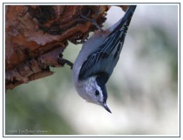 white breasted pose by photom17
