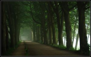 Still walking on misty lanes by jchanders