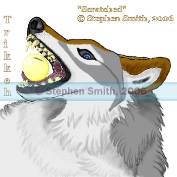 'Scratched' - Trikkeh by SGrayWolf
