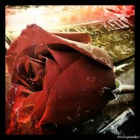 Bloody Rose Edit by Wingreader