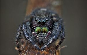 Black Jumper by BirdinByNoon