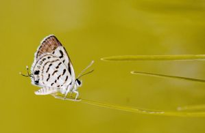 Butterfly by Yassser84