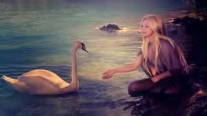 Wallpaper with swans by Korolevatumana