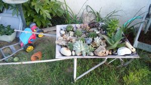 Cacti and Succulents in a Wheel Barrow by KamiraWolfDemon