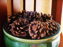 pinecones by kate131