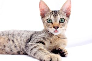 my kitty by shispis