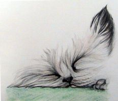 catnap by Obs3ss1On