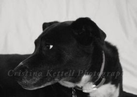 dog by Cristina-marie