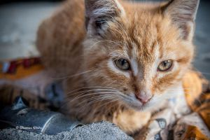 cat by ThomasWeihs