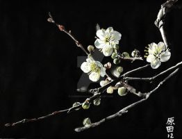 Plum blossoms 5 by carmenharada