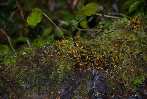 Forest Floor - 1 by RHVC
