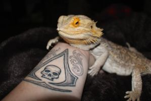 New ink with a beardie by Chesca01