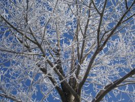 Hoar frosted tree by Paintsmudger
