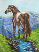 Black Stallion on the Hill by NewfieArtGirl