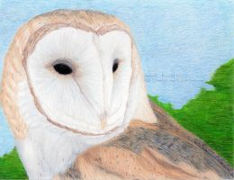 The Barn Owl by 8TwilightAngel8