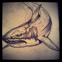 Shark. by TimHag