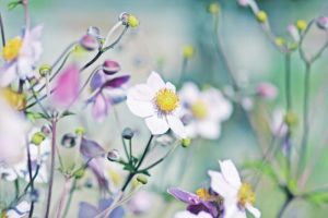 Japanese Anemones by AlicjaRodzik