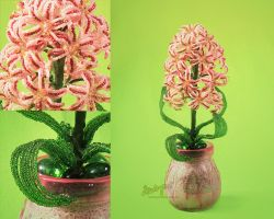 Hyacinth with close-ups by beads-poet