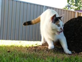 Kitty Flinched at a Bug by Mutilator-Of-Cookies
