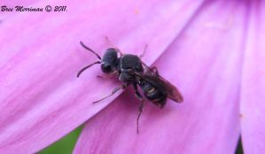 Wasp In A Sea Of Purple by BreeSpawn