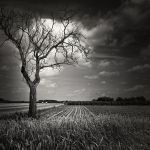 Tree And Wheat Field by LuGiais