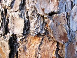 Bark Texture 4 by element321