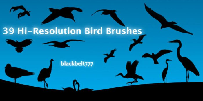 Hi-Res Bird Brushes by blackbelt777