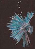 Betta III ACEO by whitetippedwaves