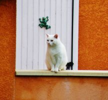 le chat blanc by libellule64wazka