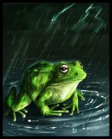 Frog by amziss
