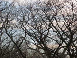Bare Limbs I by dull-stock