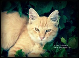 Tabby in Weeds 2 by Karl-B