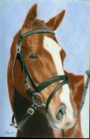 horse portrait by skippypoof