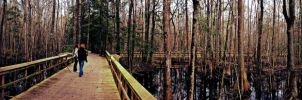 Great Swamp Sanctuary by cougarbandit